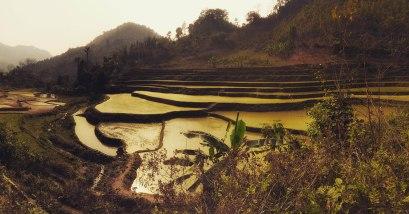 Beautiful paddies after Bao Lac