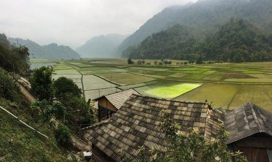 More paddies