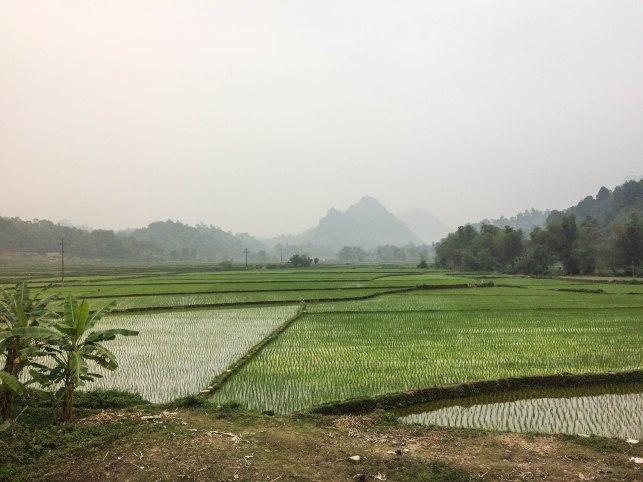 After Bao Lac = Paddieland