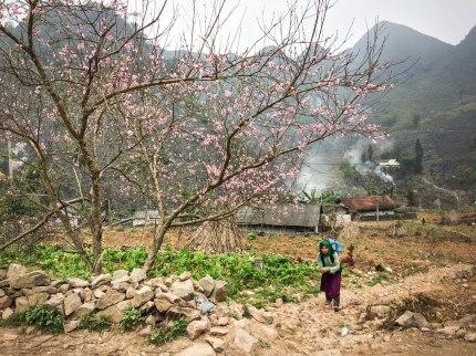 Dong Vang Plateau