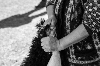 Fleece in the making